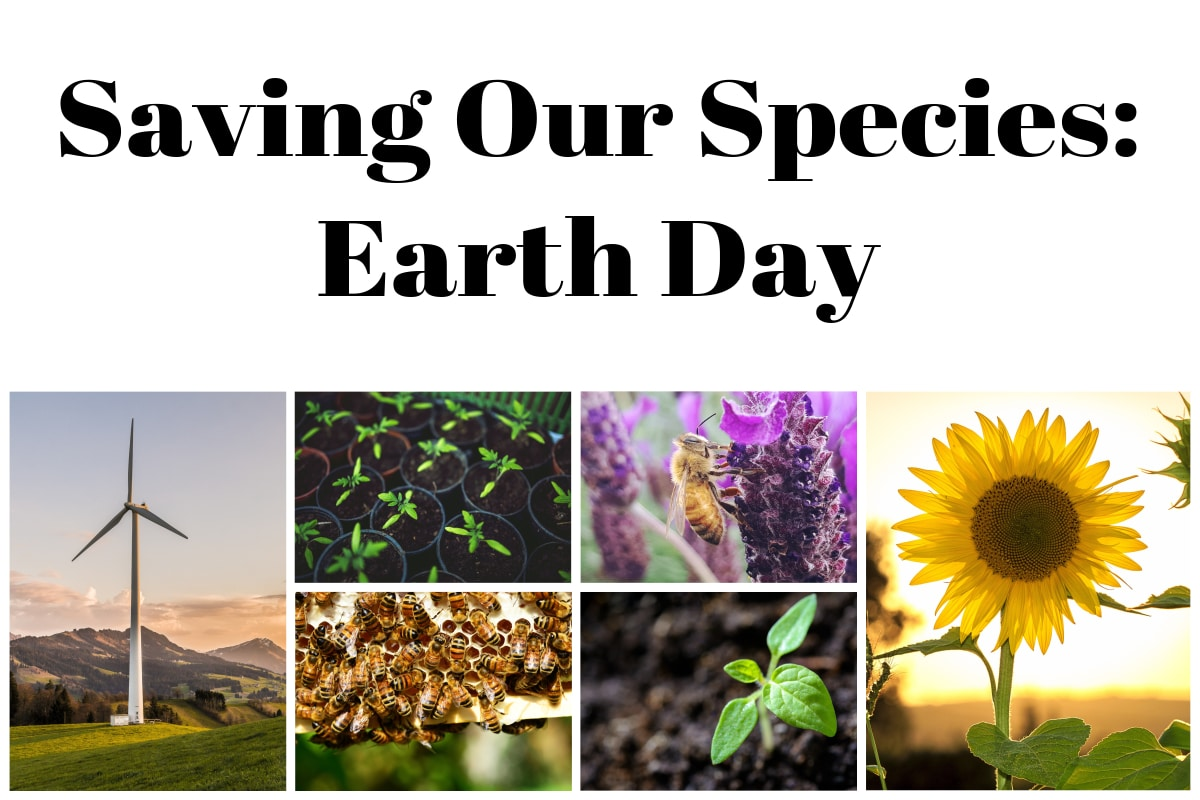 Save Our Species: Earth Day 2019 and all about bees